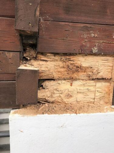 Schädlingsbekämpfung Schaden durch Hausbockbefall